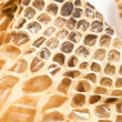 Stock Photo: Shed snakeskin closeup