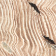 Petrified Wood closeup - Stock Photo