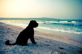 Black dog at the sea — Stock Photo