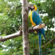 Speaking parrot in park — Stock Photo #6027896