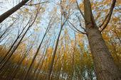 Trees — 图库照片