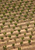 Plantation — Stockfoto
