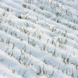 snowy field — Stock Photo