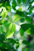 Leaves — Photo