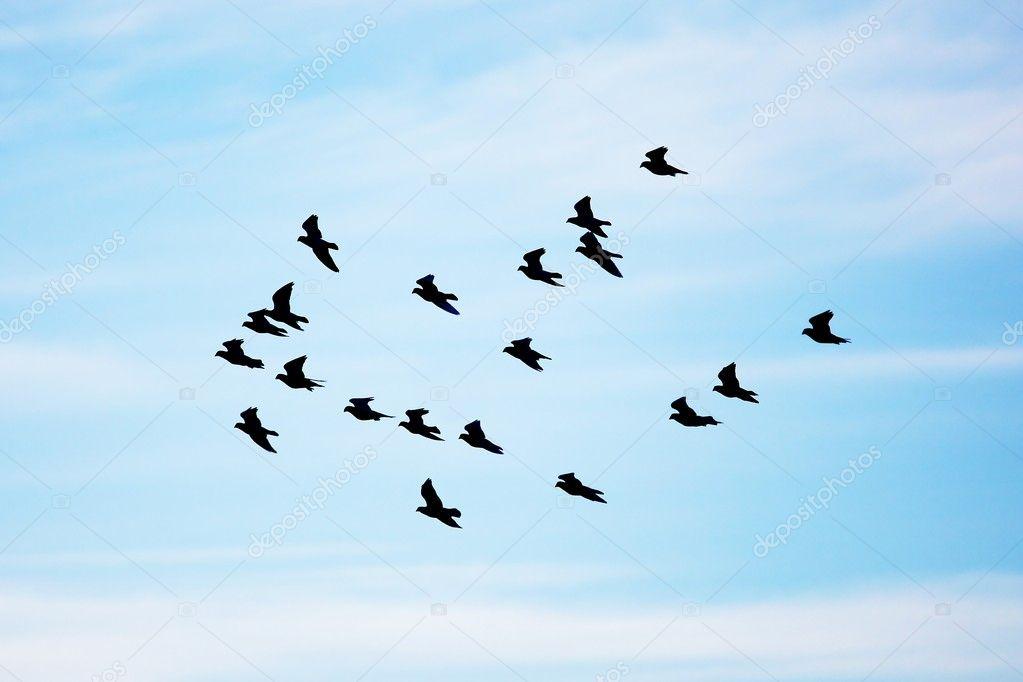 skyBirds  Airborne Perching Birds at Skyrim Nexus  mods