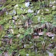 Old stone wall texture with green moss — Stock Photo