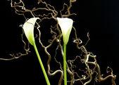 Kwiaty białe na czarnym tle — Zdjęcie stockowe