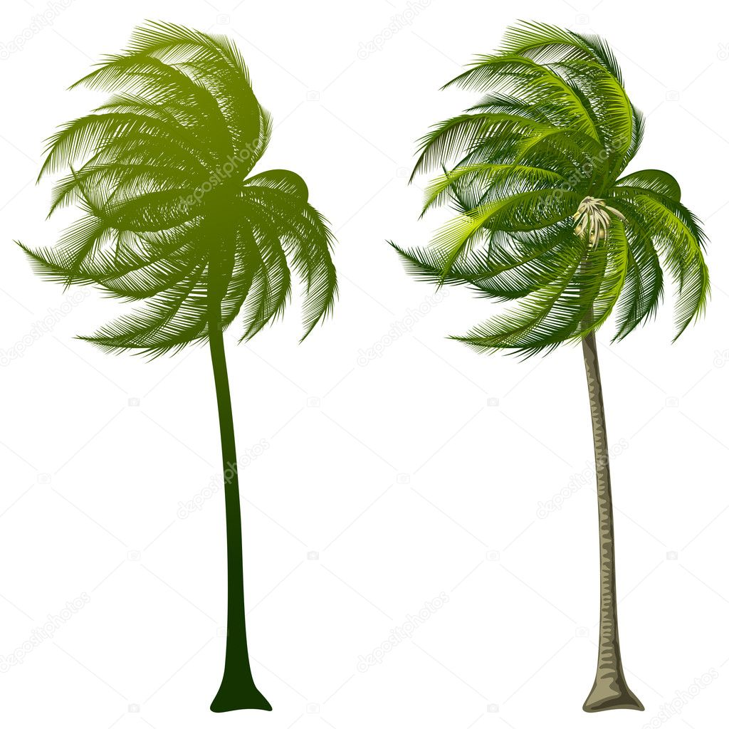 Excellent Palm Tree Vector 1024 x 1024 · 295 kB · jpeg