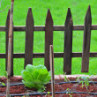 Stock Photo: Fences