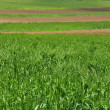 Stock Photo: Green fields