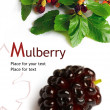 Mulberry (Morus) — Foto Stock
