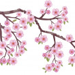 Oriental cherry - Stock Vector