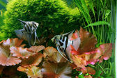 Decorative aquarium — Stockfoto