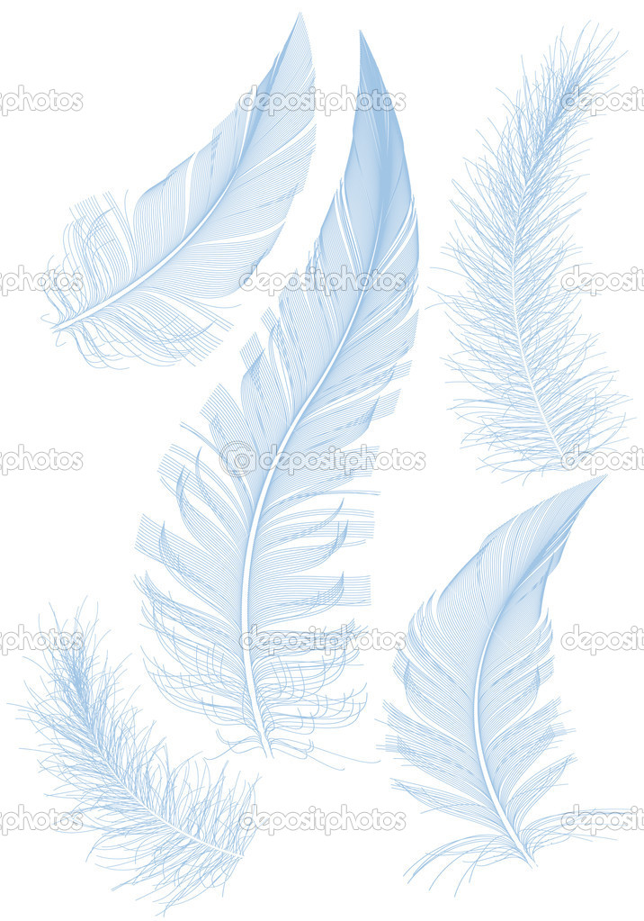 Set of smooth blue feather, vector — Vektorgrafik #5851391