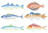 Sea fishes, vector — Stock Vector