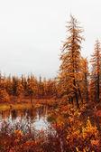 Tundra — Stockfoto