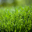 Green grass background — ストック写真