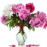 Boquet of peony in the vase isolated on white — Stock Photo #6196957