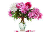 Boquet of peony in the vase isolated on white — Stock Photo