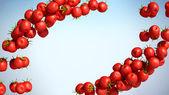 Two Tomatoe Cherry streams — Stock Photo