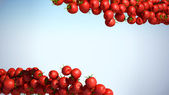 Two Tomatoe Cherry flows with space for text — Stock Photo