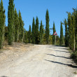 Road with cypresses — Stock Photo