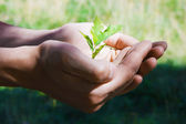 Small tree in hands — Stock Photo