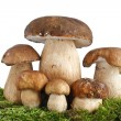Boletus Edulis mushrooms - Stock Photo