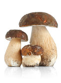 Boletus Edulis var. Aereus — Stock Photo