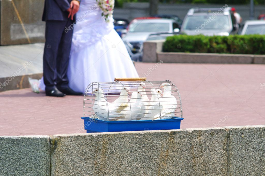Wedding doves in a cage  Stock Photo #6110355