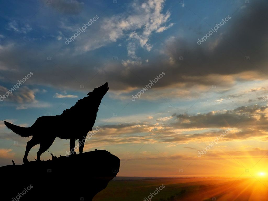 Wolve on a mountain top — Stock Photo #6457028