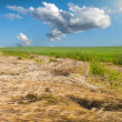 Meadow with green grass — Stock Photo