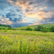Summer green meadow — Stock Photo #6613097