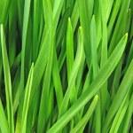 Green grass — Stock Photo #5743009