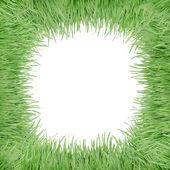 Telaio di erba — Foto Stock