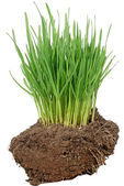 Green Grass and soil — Stock Photo