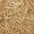 Straw texture — Stock Photo
