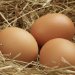 Stock Photo: Three eggs in nest