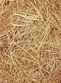 Straw texture — Stock Photo
