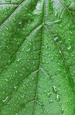 Green leaf with drops — Stock Photo