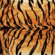 Stock Photo: Tiger skin