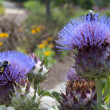 Purple Thistle Flowers with Honey Bees - Stock Photo
