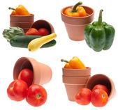 Garden Bounty — Stock Photo