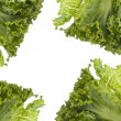 Fresh Lettuce Background — Lizenzfreies Foto