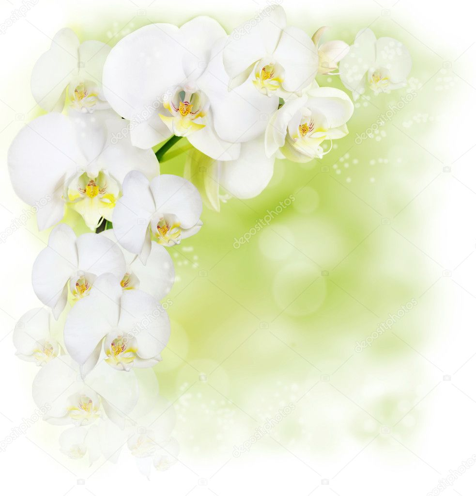 Floral border with white orchid — Stock Photo #6104195