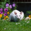 The white cat — Stock Photo