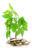 Money Tree Growing from Coins — Stock Photo