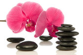 Pebbles with beautiful orchid. — Stock Photo