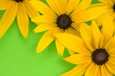 Yellow flowers on the green background. — Stock Photo