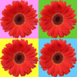 Daisies isolated on color squares. — Stock Photo #6251016